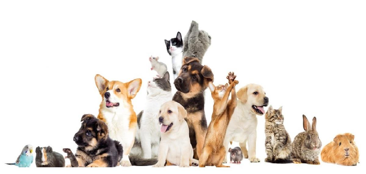 Course Image APPROCCIO MULTIDISCIPLINARE ALLA GESTIONE DEGLI ANIMALI DOMESTICI